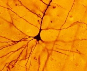 Libri di neuroscienza cognitiva