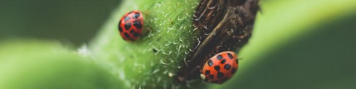 Libri sugli insetti