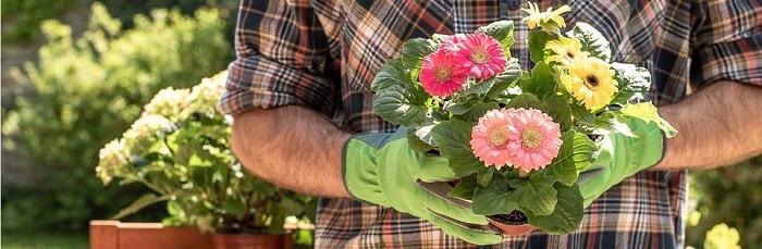 Libri di giardinaggio e piante