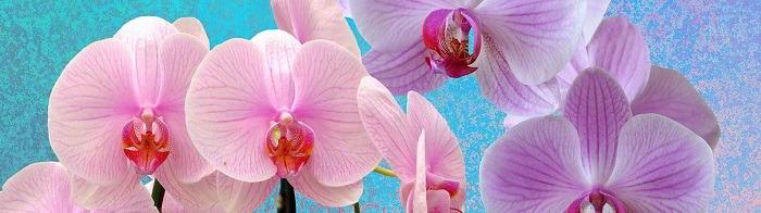 I migliori libri sulle orchidee spontanee