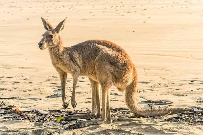 librinsull'australia