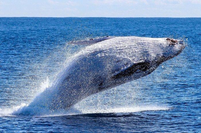 Libri sulla balene