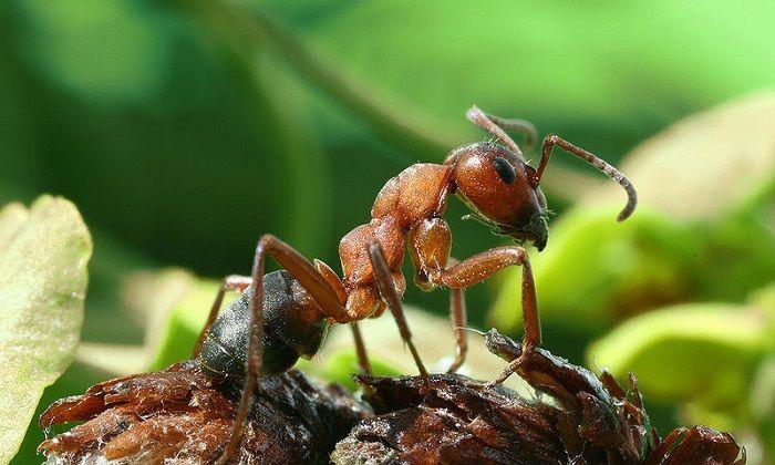 libri sulle formiche