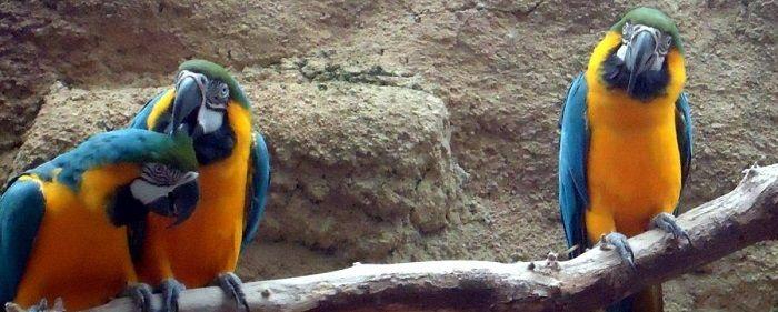 Libri sui pappagalli