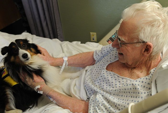 Libri sulla pet therapy