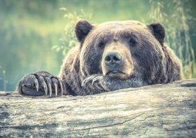 Libri sugli orsi
