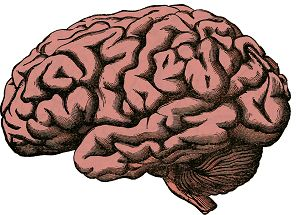psicobiologia e psicologia fisiologica, libri e manuali