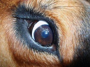 zooantroplogia devianza, libri violenza sugli animali e le persone