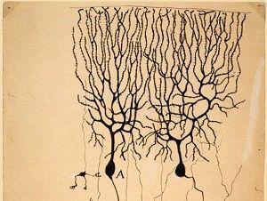 neuroni specchio libri e manuali
