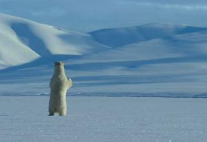 I libri più belli sull'Artico e sull'Antartide