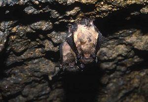 i libri più belli sui pipistrelli