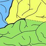 Libri e manuali di neurologia consigliati