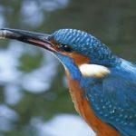 I migliori libri sugli uccelli e il birdwatching